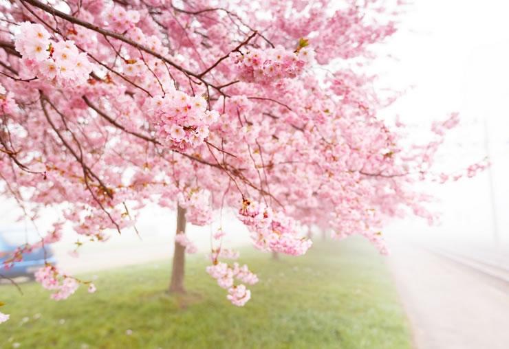 春という季節